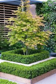 garden design with gnw bls small cherry blossom tree color