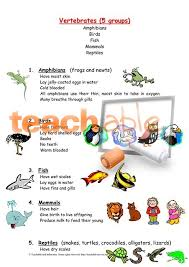 all worksheets vertebrates and invertebrates worksheets