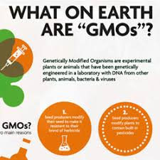 The Debate On Genetically Modified Organisms Gmos By Jing Fong