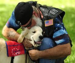 patriot service dogs u2026 golden justice for all u2013 land of