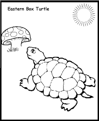 turtle coloring pages kids kids coloring