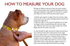 dog ribbon ribbon webbing dog collar with laser engraved personalized
