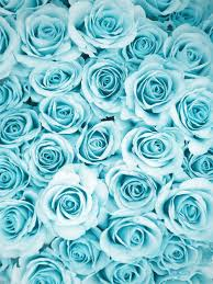 turquoise flowers blue via on we heart it
