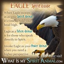 symbolism of a tree eagle symbolism u0026 meaning spirit totem u0026 power animal