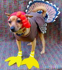 Funny Halloween Costumes Cats 55 Halloween Dog Costumes Images Animals Pet