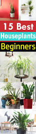 Best Plants For No Sunlight 15 Best Houseplants For Beginners Balcony Garden Web