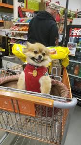 132 best home depot dogs images on pinterest the o u0027jays home