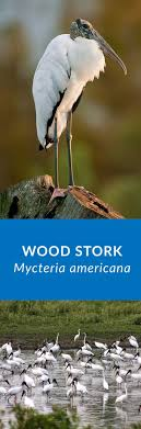 Mississippi wildlife tours images 32 best mississippi wildlife images mississippi jpg