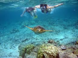 North Dakota snorkeling images 7 great family friendly snorkeling in the hawaiian islands trekaroo jpg
