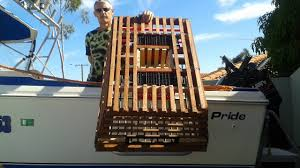 diy how to build your own craypot lobster pot perth wa youtube