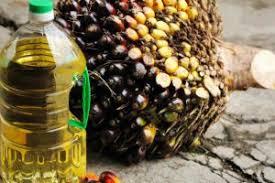 Minyak Cpo keunggulan cpo dibanding minyak nabati buana sawit sejahtera