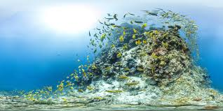 Coral Reefs Of The World Map by Interactive Coral Reef Panoramas Will Make You Your