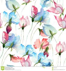 Sweet Pea Images Flower - seamless wallpaper with sweet pea flowers royalty free stock