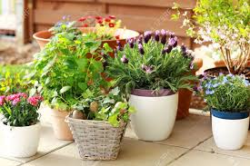 small flower pot outdoor flower pots for small garden patio or terrace stock photo