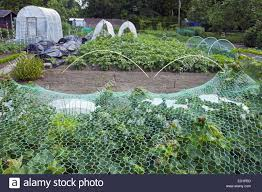 plastic tunnels and protective netting over vegetables growing in