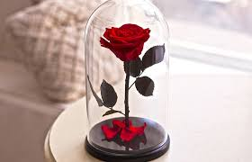 rose in glass preserved rose in glass 89 beauty and the beast home decor