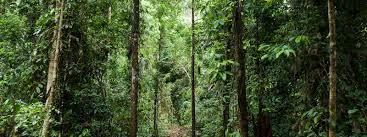 forest habitat habitats wwf