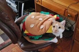 Halloween Costumes Cats 28 Halloween Costumes Cats 20 Favorite