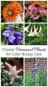 easy plants growing perennials how to grow perennial plants the gardening cook