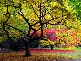 sunset through the trees by jaydelee on deviantart