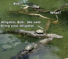 Alligator Meme - alligator meme by garrettcox2013 memedroid