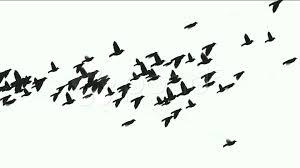flying birds silhouette stock video 808980 pond5