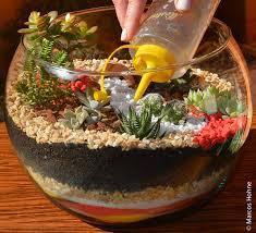 resume modernos terrarios suculentas como cuidar de um terrário de suculentas suculentas terrario y