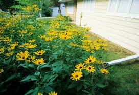 native plants for wildlife habitat and conservation landscaping hometown habitat chesapeake conservation landscaping