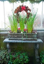 How To Grow A Bulb In A Vase Forcing Beautiful Bulbs For Your Indoor Garden