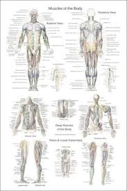 Leonardo Da Vinci Human Anatomy Drawings Anatomy Drawings Human Skeletons Leonardo Da Vinci Poster