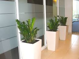 office plant creative juice