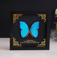 personalised blue morpho butterfly wall frame by made with