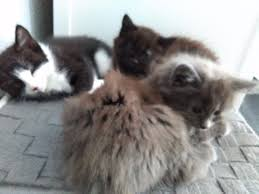 beautiful kittens for sale in southampton hampshire gumtree