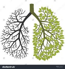 tree branches like lungs one branch stock vector 150685340