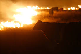 Wildfire Ranch by Did You Even Hear About These Crazy Wildfires In The Midwest