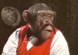 bentley orangutan too much monkey business u201clancelot link secret chimp u201d u0026 the