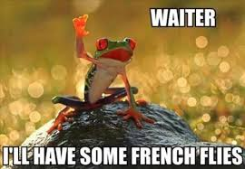 Clean Animal Memes - french flies funny animal pictures v2