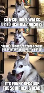 Dead Squirrel Meme - bad pun dog meme imgflip