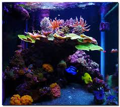 saltwater reef aquariums ideas on the other hand planted tanks
