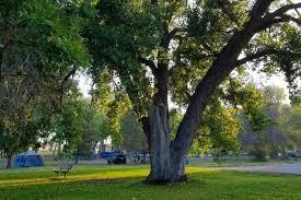 the significance of trees in various centuries countries and