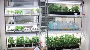 Indoor Herb Garden Light How To Grow Vegetables Indoors Without Sunlight