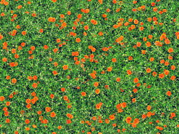 free images nature blossom field lawn meadow prairie
