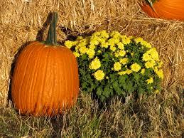 pumpkins border clipart fall pumpkin peeinn com