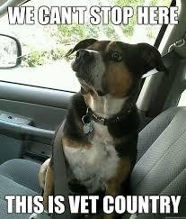 Dog At Vet Meme - anxiety dog memes quickmeme