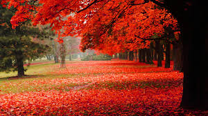 autumn beauty wallpapers autumn beauty pc backgrounds 47 54zt