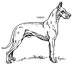 coloring pages color pages dogs color pages dogs and cats color