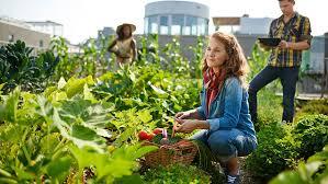 start your own edible garden