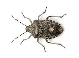 Small Black Flying Bugs In Bathroom Pest Id Guide Gladhill Services