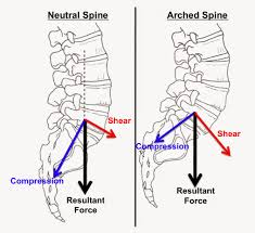 Spine Map Fitness Pollenator Brief Lessons In Biomechanics Taking Care Of