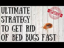 How To Check For Bed Bugs At Home How To Check For Bedbugs With Pictures Wikihow